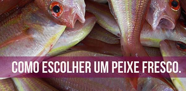 como-escolher-um-peixe-fresco
